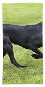 Black Labrador Playing Bath Towel