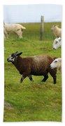 Black Sheep Bath Towel