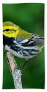 Black-throated Green Warbler, Male Bath Towel