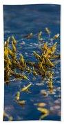 Bladder Seaweed, Fucus Vesiculosus Bath Towel