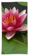 Blossoming Waterlily Bath Towel