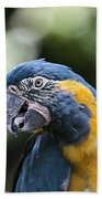 Blue And Gold Macaw V5 Bath Towel