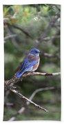 Blue Bird Perched Bath Towel