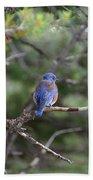Blue Feathers Bath Towel
