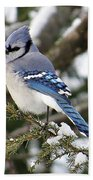 Blue Jay On Hemlock Bath Towel