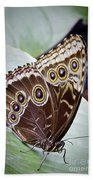 Blue Morpho Butterfly Costa Rica Bath Towel
