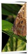 Blue Morpho Butterfly Bath Towel