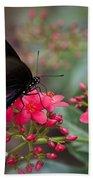Blue Swallowtail Butterfly  Bath Towel