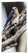 Bluebird Bath Towel