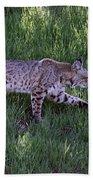 Bobcat On The Move Bath Towel