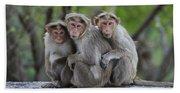 Bonnet Macaque Trio Huddling India Bath Towel