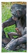 Bonobo Adult Playing With Baby Bath Towel