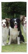 Border Collie Dogs Bath Towel
