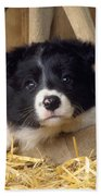 Border Collie Puppy And Wooden Wheel Bath Towel