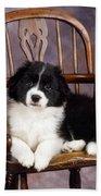 Border Collie Puppy On Chair Bath Towel