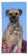 Border Terrier Dog, In Heather Bath Towel