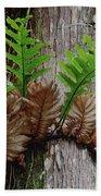 Borneo Fern A Primitve Ant Plant Bath Towel