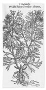 Botany: African Rue, 1597 Bath Towel