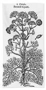 Botany: Giant Fennel, 1597 Bath Towel