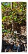Breadfruit Tree Bath Towel