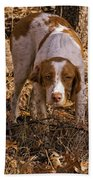 Brittany Spaniel Pixel's Pointed Woodcock Bath Towel