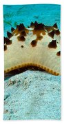 Brittle Star Fish Bath Towel
