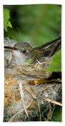 Broad-billed Hummingbird In Nest Bath Towel