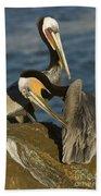 Brown Pelicans Bath Towel