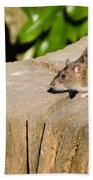 Brown Rat On Log Bath Towel