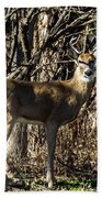 Buck In The Woods Bath Towel