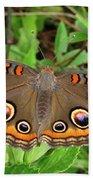Buckeye Butterfly Bath Towel