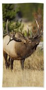 Bull Elk II Bath Towel