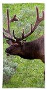 Bull Elk In Yellowstone Bath Towel