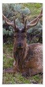 Bull Elk Bath Towel