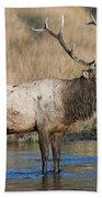 Bull Elk On The Madison River Bath Towel