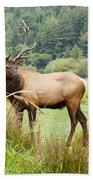 Bull Elk On Watch Bath Towel