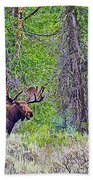 Bull Moose In Gros Ventre Campground In Grand Tetons National Park-wyoming Bath Towel