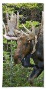 Bull Moose Shedding Velvet Bath Towel