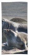 Bull Seal Bath Towel