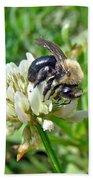 Bumblebee On White Clover Bath Towel