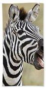 Burchells Zebra Equus Quagga Burchellii Bath Towel