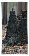 Burnt Tree Trunk Bath Towel