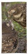 Burrowing Owl Feeding It's Chick Photo Bath Towel