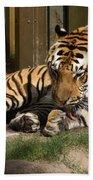 Busch Tiger Bath Towel