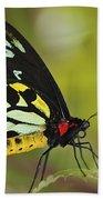 Butterfly 022 Bath Towel