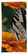 Butterfly On Zinnia Bath Towel