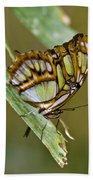 Butterfly Siproeta Stelenes Bath Towel