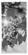 Bw Lens Flare Hanging Thompson Grapes Sultana Bath Towel