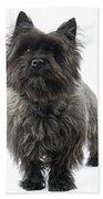 Cairn Terrier Dog Bath Towel
