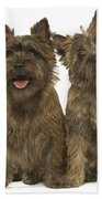 Cairn Terriers Bath Towel